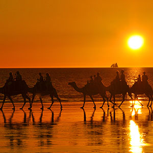 Sunset Camel Ride at Cable Beach