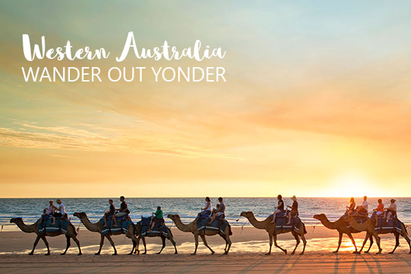 MC Header Wander out Yonder 112221 Camels at sunset on Cable Beach Broome Credit Tourism WA