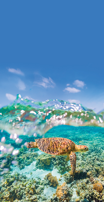 NEW WEB MOBILE 0002 Coral Expeditions NINGALOO shutterstock turtle