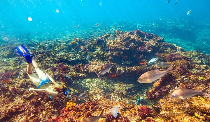NEW WEBSITE Gallery Eco Abrolhos Islands 0005 Page 63 Eco Abrolhos bottom phot0