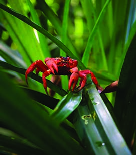 OUR PICKS  0004 XCH Red Crab 3Z2A2425 Credit Kirsty Faulkner