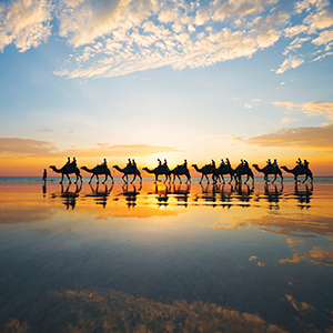 WEB BME  0005 111395 56 Camels at sunset on Cable Beach Mandatory Credit Lauren Bath