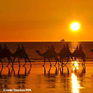 Broome Sunset - Camels