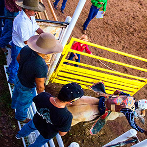 OVM  0002 T Malkin OVM 2016 Rodeo 2767 Edit