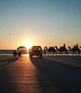 OUR PICKS 0001 112237 56 Camels at sunset on Cable Beach Mandatory credit Tourism Western Australia