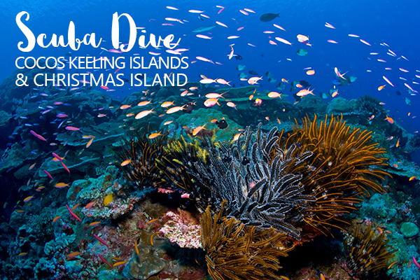 HEADER  0001 cki xch Diving Christmas cr MathieuMeur 1